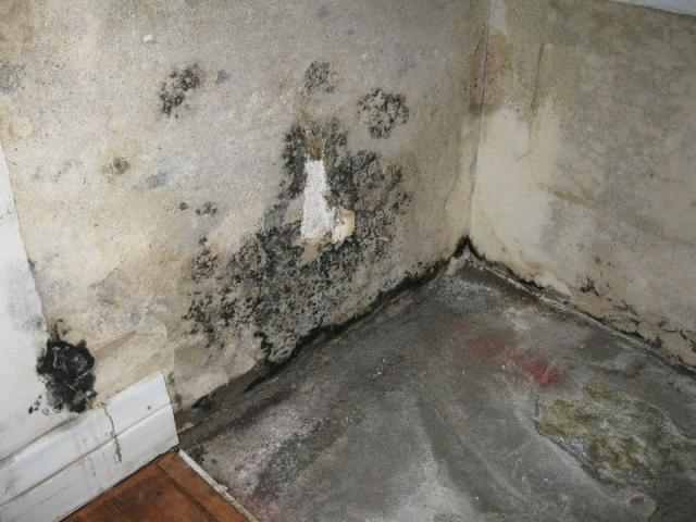 Mold discovered behind bathroom counter and under wallpaper.